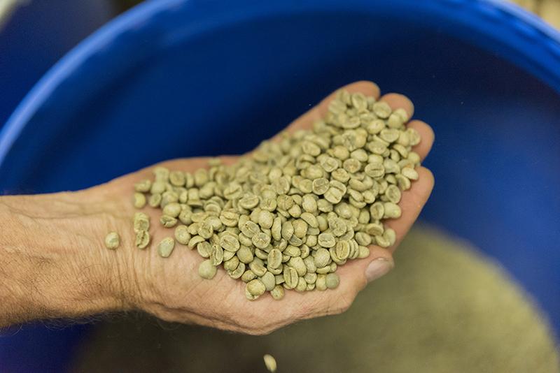 El café arábica, en cambio, crece entre 800 y 2000 metros de altitud. Zaragoza